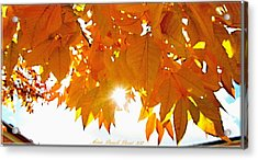 Sun Kissed  Deciduous Acrylic Print by Danielle  Parent