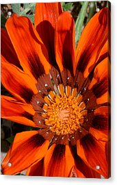 Sunburst Acrylic Print by Whispering Dove