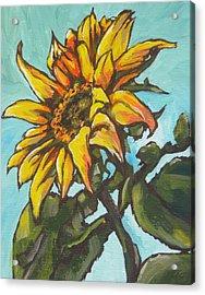 Sunflower 1 Acrylic Print by Sandy Tracey