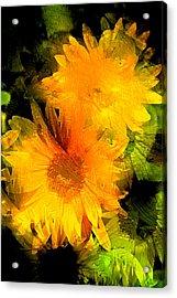Sunflower 2 Acrylic Print by Pamela Cooper