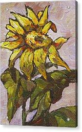 Sunflower 5 Acrylic Print by Sandy Tracey
