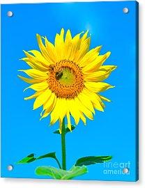 Sunflower And Bee Acrylic Print by Debbi Granruth