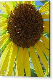 Sunflower-two Acrylic Print by Todd Sherlock