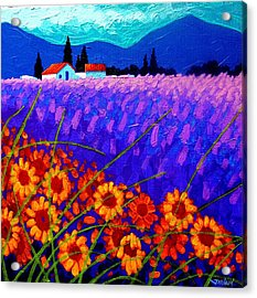 Sunflower Vista Acrylic Print by John  Nolan