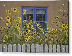 Sunflowers Bloom In A Garden Acrylic Print by Ralph Lee Hopkins