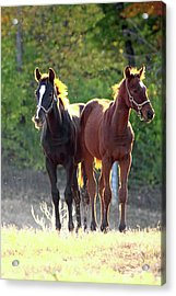 'sunlight Babies' Acrylic Print by PJQandFriends Photography