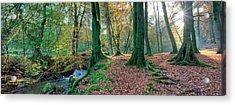 Sunlit Woodland, Birks O'aberfeldy, Perthshire Acrylic Print by Kathy Collins