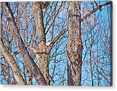 Sunning In The Tree Acrylic Print by Aimee L Maher Photography and Art Visit ALMGallerydotcom