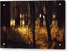 Sunset Falls Over Seeding Grasses Acrylic Print by Jason Edwards