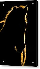 Sunset Horse Silhouette Canada Acrylic Print by Mark Duffy