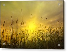 Sunsets To Remember Acrylic Print by Tom York Images