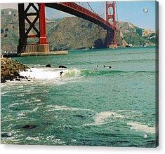 Surfing The Golden Gate Acrylic Print by Rhonda Jackson