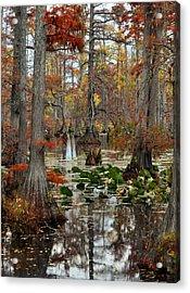 Swamp In Fall Acrylic Print by Marty Koch