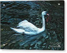Swan Acrylic Print by Gregory Dyer