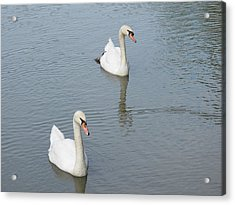 Swans Drifting Along Acrylic Print by Corinne Elizabeth Cowherd