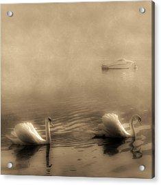 Swans Acrylic Print by Joana Kruse