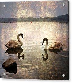 swans on Lake Varese in Italy Acrylic Print by Joana Kruse