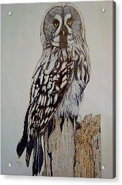 Swedish Uwl Acrylic Print by Per-erik Sjogren