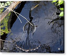 Swimming Bird Acrylic Print by David Lee Thompson