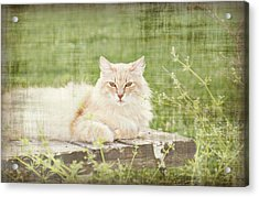 Tabitha  Acrylic Print by Susan Bordelon