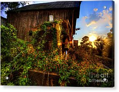 Tactor Overgrown With Flowers And Weeds At Sunset Acrylic Print by Dan Friend