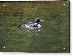 Taking A Rest Acrylic Print by Ann Caduff