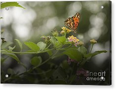 Talk To Me Acrylic Print by Kim Henderson