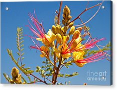 Tall And Bright Acrylic Print by Bob and Nancy Kendrick