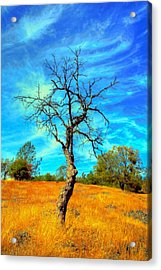 Tall Bare Tree With White Clouds And Blue Sky. Acrylic Print by Gregory Dean