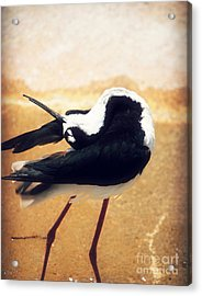 The Ballerina Bird Acrylic Print by Peggy  Franz