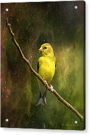 The Beauty Of Youth Acrylic Print by J Larry Walker