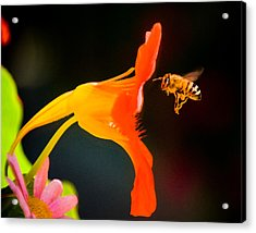 The Bee Acrylic Print by Mickey Clausen