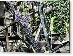 The Big Picture Acrylic Print by JC Findley