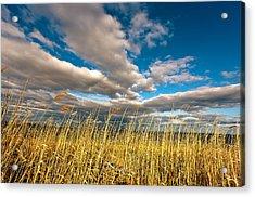 The Clouds Acrylic Print by Alhaji Samura