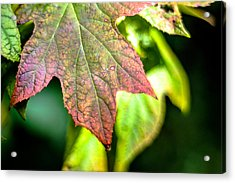 The Colors  Acrylic Print by The Phoblographer
