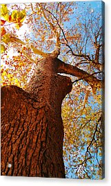 The Deer  Autumn Leaves Tree Acrylic Print by Peggy  Franz
