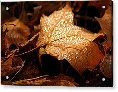 The Enlightened Maple Leaf Acrylic Print by LeeAnn McLaneGoetz McLaneGoetzStudioLLCcom