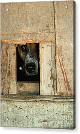 The Face Of Hoarding Acrylic Print by Nola Lee Kelsey