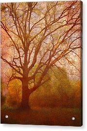 The Fairy Tree Acrylic Print by Brett Pfister