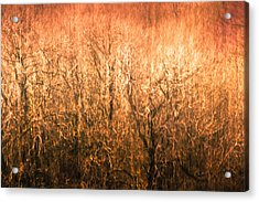 The Forest Fire Acrylic Print by Justin Albrecht