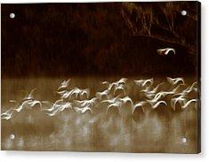 The Glades Acrylic Print by Bruce J Robinson