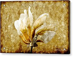 The Golden Magnolia Acrylic Print by Andee Design