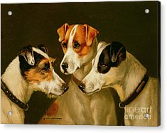 The Hounds Acrylic Print by Alfred Wheeler