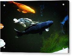 The Koi Jungle Acrylic Print by Don Mann