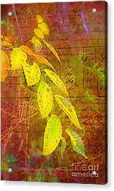 The Leaves Of Yesteryear Acrylic Print by Judi Bagwell
