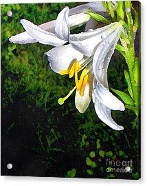 The Lily Acrylic Print by Odon Czintos
