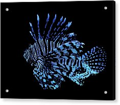 The Lionfish 3 Acrylic Print by Robin Hewitt