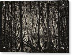 The Mangrove Acrylic Print by Armando Perez