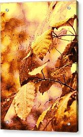 The Melody Of The Golden Rain Acrylic Print by Jenny Rainbow