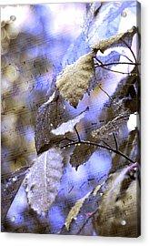 The Melody Of The Silver Rain Acrylic Print by Jenny Rainbow
